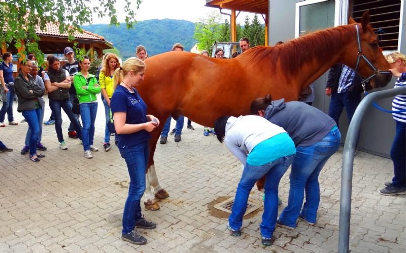 müssen pferde geimpft werden